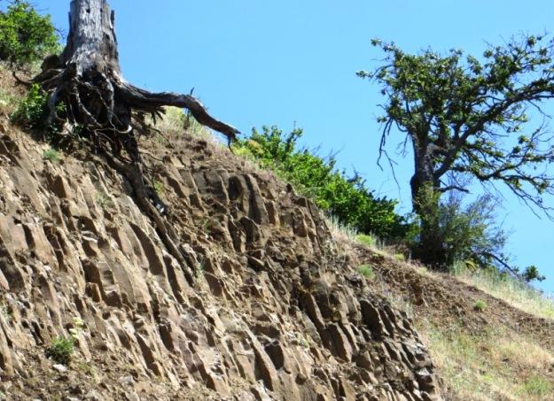 tree stump on cliff