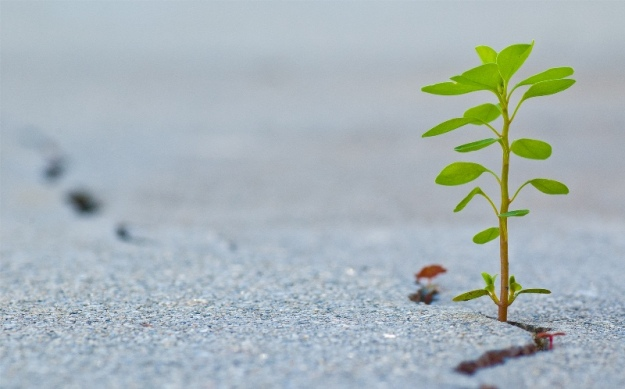 Seedling by Ray_from_LA